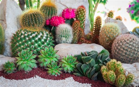 how to create a cactus garden garden pics and tips