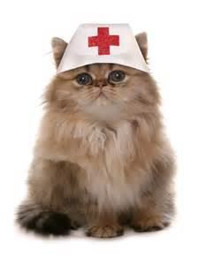 doctor cat cat doctor
