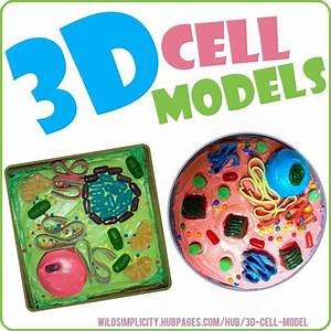 202 Best Images About Plant Cell School Project On