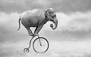 Funny elephant on the bicycle new wallpapers HD