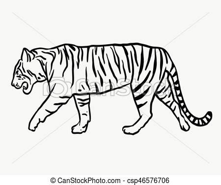 tiger wild animal sketch vector tiger wild animal vector