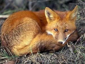 Life In The Taiga : animal life taiga ~ Frokenaadalensverden.com Haus und Dekorationen