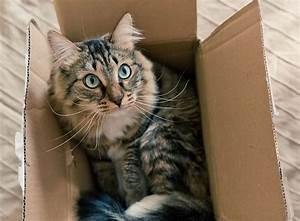 Mit Katze Umziehen : revierwechsel umzug mit katze zooroyal magazin ~ Michelbontemps.com Haus und Dekorationen