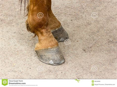 horseshoe hooves horse metal close brown young preview