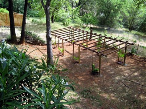 grape vine arbor designs grape arbor plans bbs radio is going green and planting the seed in you grapevine arbor