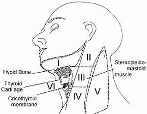 Lymph Node Levels Of The Neck  As First Defined And