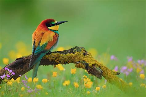 Desktop Hd National Geographic Bird Pictures