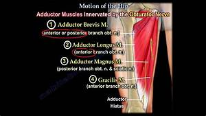 Anatomy Of Movement Of The Hip