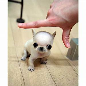 Top 25 ideas about Puppy shop on Pinterest | Chihuahuas ...