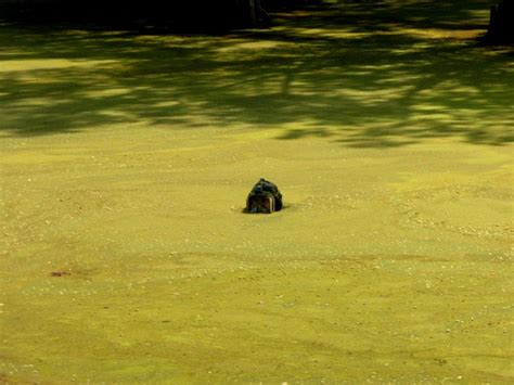 harmful algal blooms receive national attention