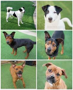 Before And After Adoptable Dogs From The Spca Of Wake