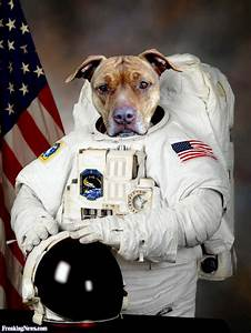 Astronaut Dog Costume Dog Beds and Costumes