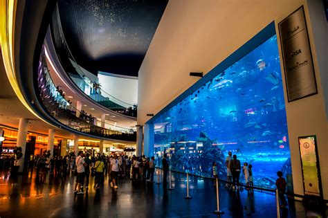 dubai mall aquarium in wall tunnel aquarium by icm