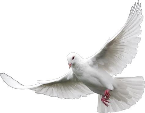 dove white caucasian race images reverse search