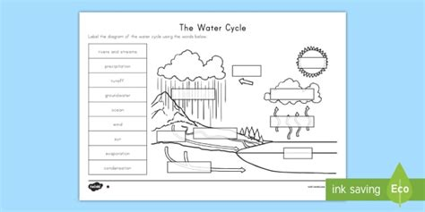 The Water Cycle Differentiated Worksheet  Activity Sheets