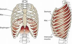 How to Activate Your Diaphragm to Improve Breathing and ...