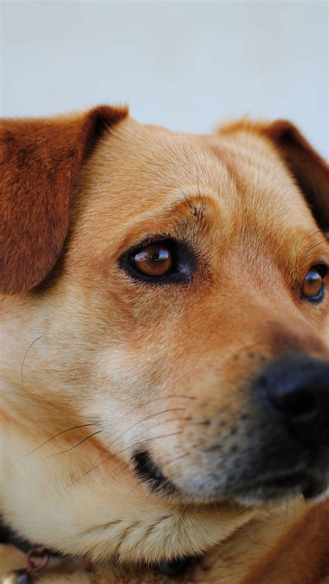 Animal Wallpapers For Iphone - animal pet puppy iphone wallpaper idrop news