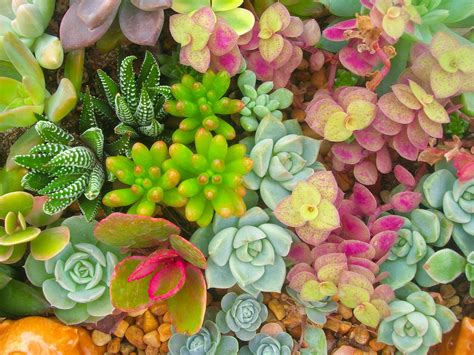 types of succulent plants the 7 most popular types of succulents
