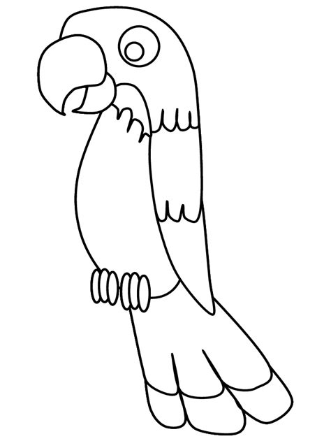 printable birds parrot animals coloring pages