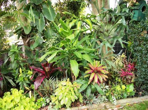 ideas  tropical gardens  pinterest