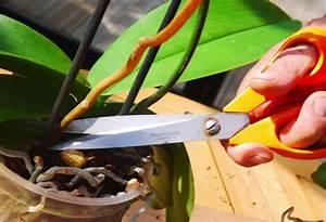 comment couper une orchidee swyzecom With tapis de marche avec comment refaire un canapé en simili cuir