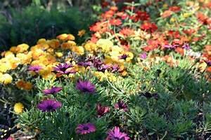 Garten Im Herbst : den garten im herbst farbenfroh mit blumen und pflanzen gestalten ~ Watch28wear.com Haus und Dekorationen