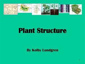 Ppt - Plant Structure Powerpoint Presentation