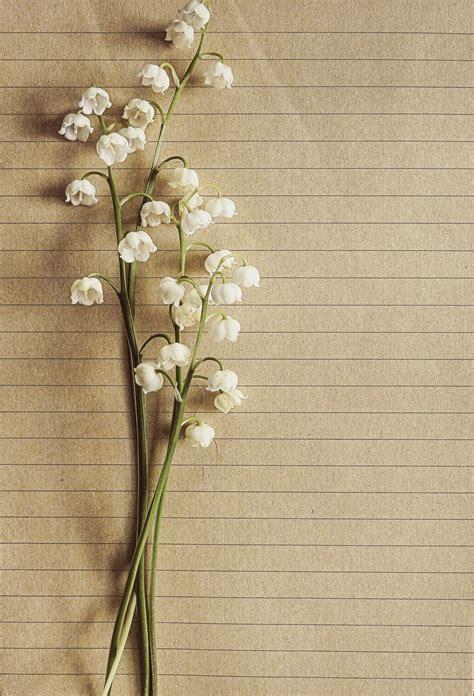 white petaled flower  brown trunks  stock photo
