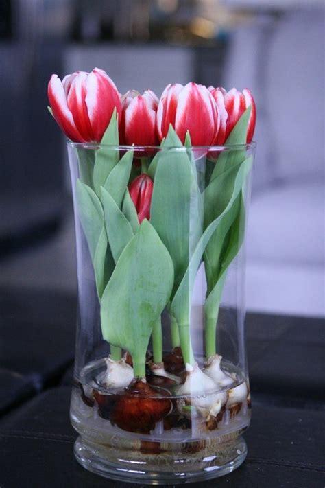 blumen dekorieren im glas fr 252 hlingsdeko im glas ideen vase weisse tulpen knollen wasser blumen wohnklamotte tulpen