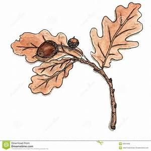 Oak Branch With Leaves And Acorns Stock Illustration ...