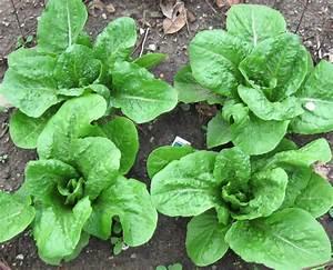 FeltSewGood: How Does Your Garden Grow?