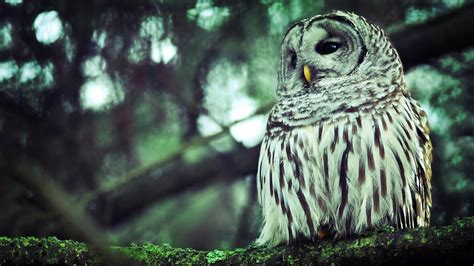 Owl Wallpapers by Beautiful Owl Hd Wallpapers Owl Hd Wallpapers Owl