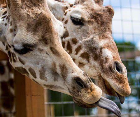 animals animal adventure park
