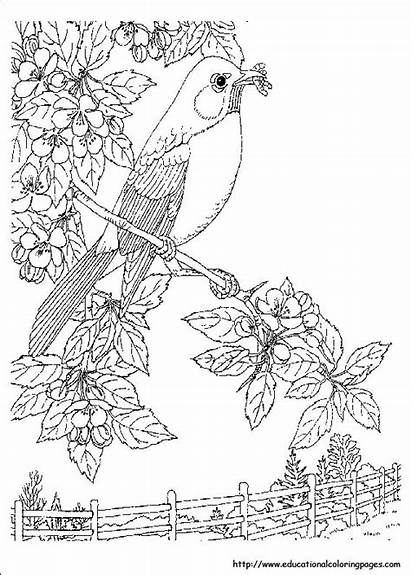 Coloring Nature Pages Realistic Printable