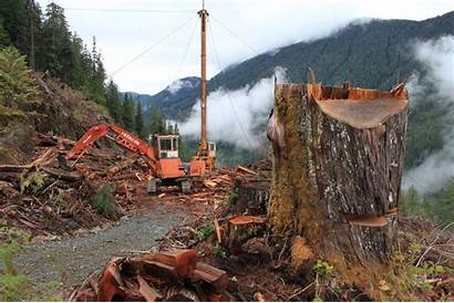 Growth Logging Investigation Under Logged Newspaper Eric