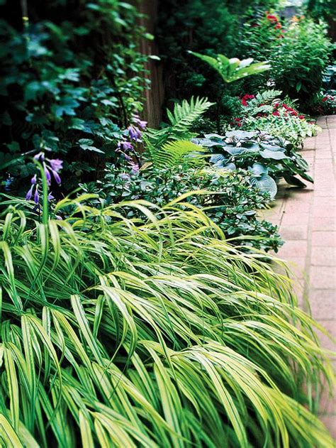 best plants for shade the best perennials for shade