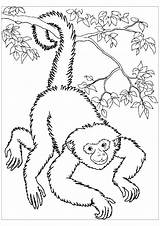 Monkey Coloring Monkeys Pages Spider Printable Easy Colour Colouring Adult Children Panama Getdrawings Getcolorings Justcolor sketch template