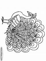 Peacock Coloring Pages Drawings טווס Printable Peacocks Google Cl Peafowl Adult Colours Coloring2print sketch template