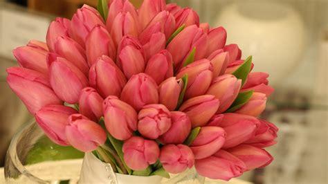 pink tulips bouquet huge hd wallpaper wallpaperscom
