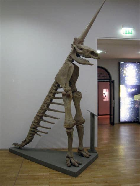 steinkernde die fossilien community das