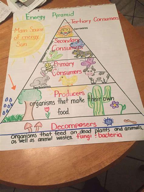 energy pyramid worksheet  grade teaching energy