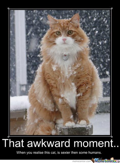 Awkward Cat Meme - awkward cat sexiness by tigerr meme center