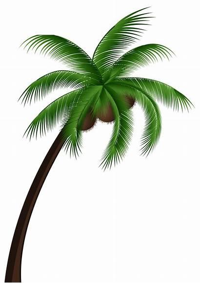 Coconut Palm Tree Clipart Clip Transparent Leaves