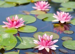 Water Lily Clipart Labeled Diagram 5