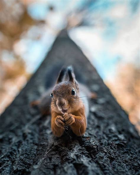 12096 professional photographs of animals photographer shoots forest animals like they re