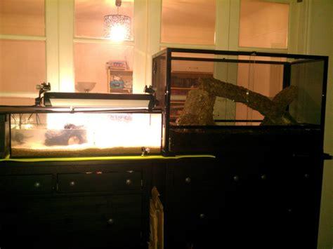 aquarium pour pelomedusa identification et maintenance des tortues aquatiques