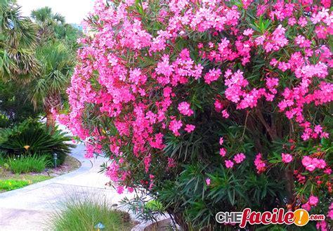 arbusti da fiore sempreverdi gli arbusti piante da giardino