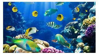 Nature fish coral reef exotic wallpaper   1920x1080   260738      Coral Reef Wallpaper 1920x1080