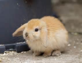 Baby Bunnies Sale