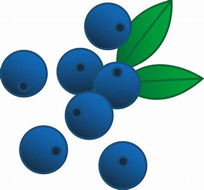 Blueberries Clip Clipart Berries Berry Foods Healthy